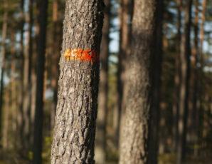 Séance de marquage de bois