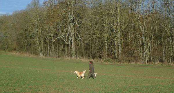 Bordure_bois_avec_chien