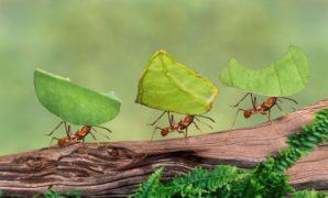 Comment organiser son team building écologique ?